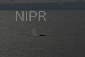 NIPR_060108.JPG