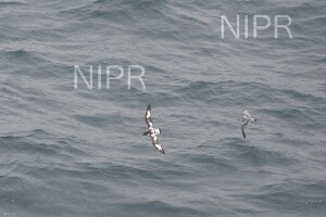 NIPR_060125.JPG