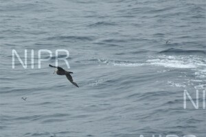 NIPR_060127.JPG